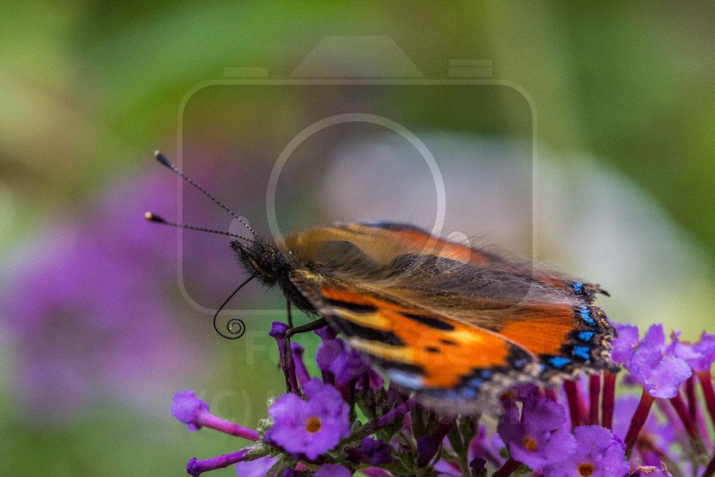Fauna und Flora in Garten und Terrasse