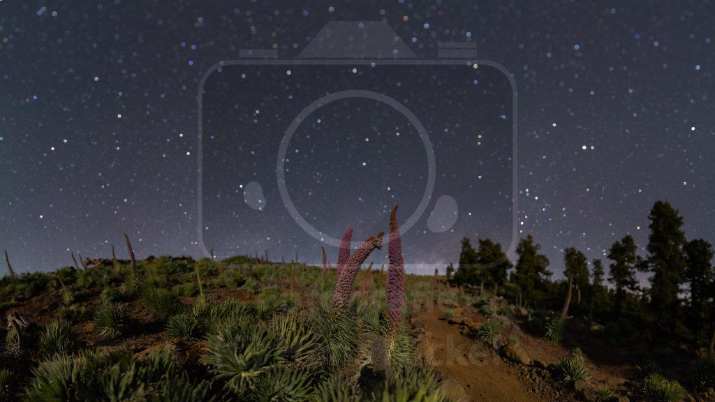Sternenhimmellandschaften
